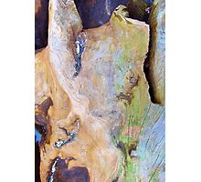 Rainbow Driftwood Photographic Print