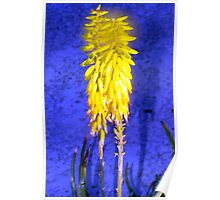 Glowing aloe flowers Poster