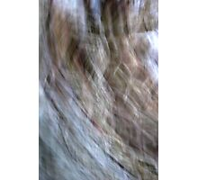 Cherry Streaks Photographic Print