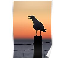 Vocal Seagull Poster