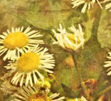 Golden Sunshine Sticker