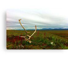 Caribou Kill Canvas Print