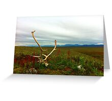 Caribou Kill Greeting Card