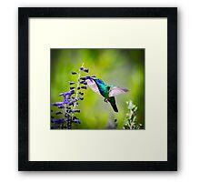My Secret Garden, Violet Eared Hummingbird. Framed Print