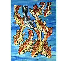 Nine Goldfish Photographic Print