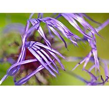 Soft Purple. Photographic Print