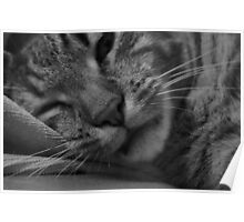 Sleepy Cat Poster