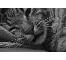Sleepy Cat Photographic Print