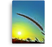 Grass spike with seeds in front of setting sun Canvas Print