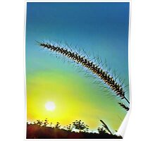Grass spike with seeds in front of setting sun Poster