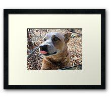 Sweet Dog Dallas Framed Print