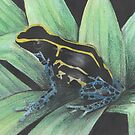 Black, yellow and blue frog by Lyndsey Hale
