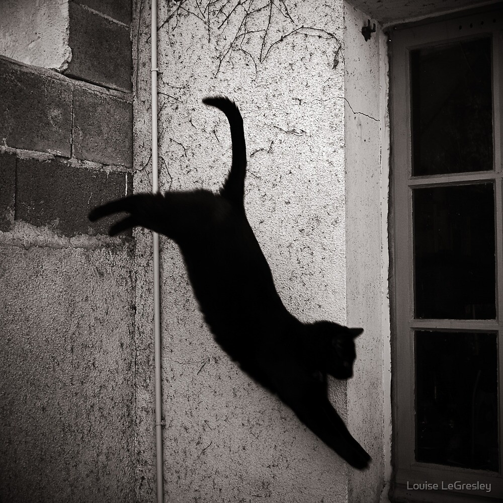 _ leap of faith _ by Louise LeGresley