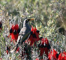 In the Desert Bloom by EnviroKey
