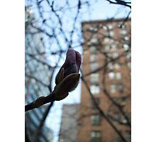 Budding Photographic Print