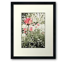 Tulip Framed Print