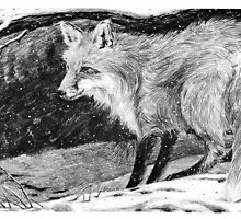 Christmas visitor ~ Red fox in evening snow by Susana Weber