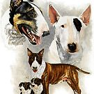 Bull Terrier by BarbBarcikKeith