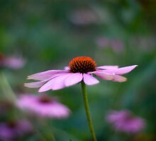 Late Summer by imagejournal