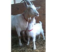 Goat Kisses Photographic Print