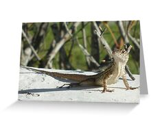 Looking for New Horizons Greeting Card