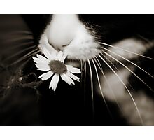 miss daisy Photographic Print