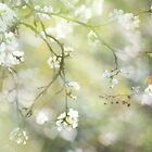 First Days of Spring II by aesthetic221
