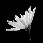 Flower 2 by Daniel Pritchard