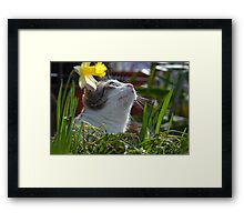 Now where is the fly? Framed Print