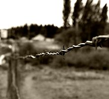 Barbed Wire Fence by Amanda McHady