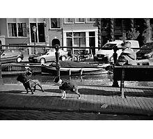 Ferocious Frenchies Photographic Print