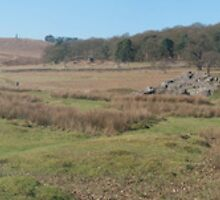 Panoramic Photograph of Fields by Callum Holt