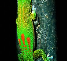 Gold-dust Day Gecko by Robbie Labanowski