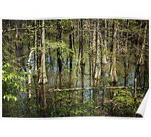 Spring Swamp Poster
