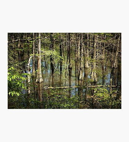Spring Swamp Photographic Print