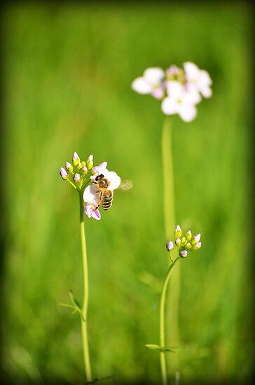 Bee Green by Luke Griffin