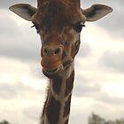 Giraffe by sjlphotography