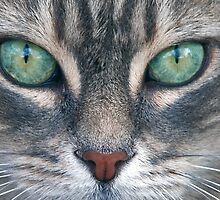 Cat's Eyes by sjlphotography