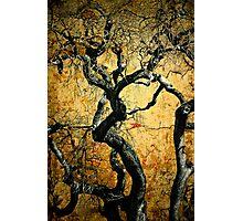 Tree of Wisdom Photographic Print