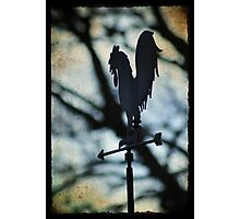 The wind in the trees - Torphins Photographic Print