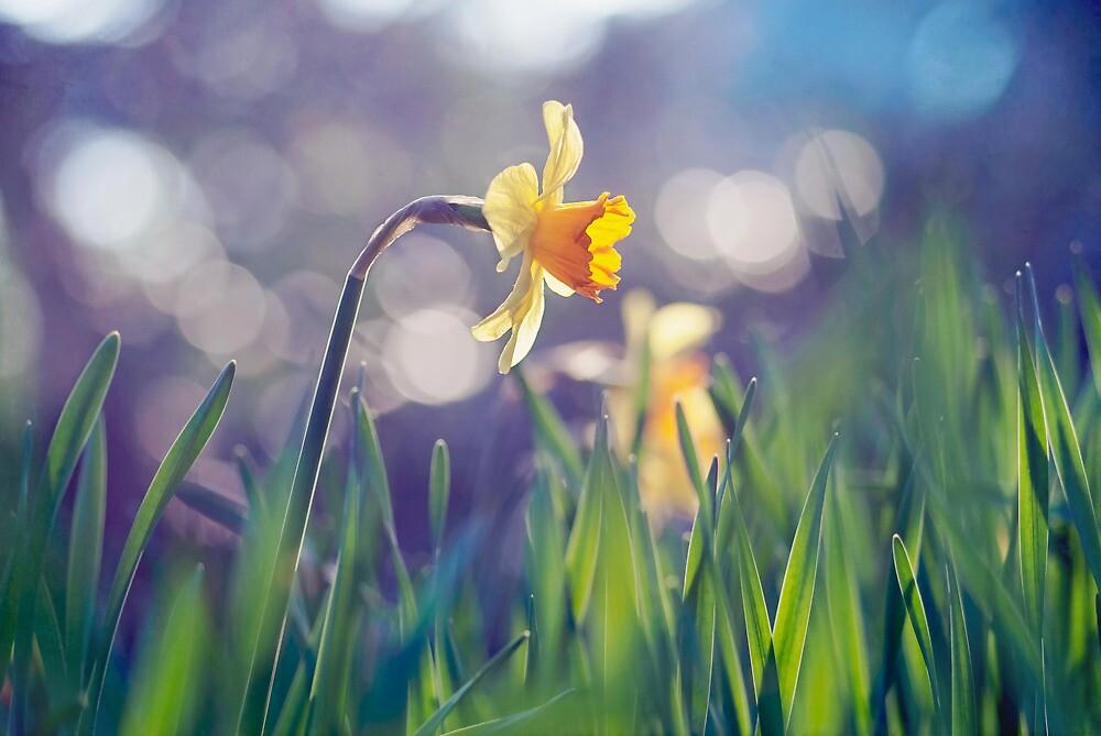 The Light of Spring by Lars Basinski