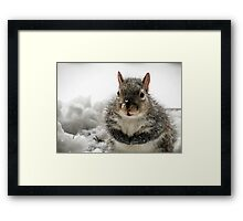 Squirrel Praying For Food In Snow At My Door Framed Print