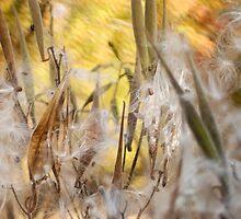 Milkweed Mirage by ChelseaRising
