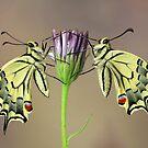 Symmetry by jimmy hoffman