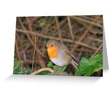 Robin Redbreast. Greeting Card