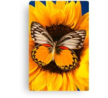 Butterfly On Sunflower Canvas Print