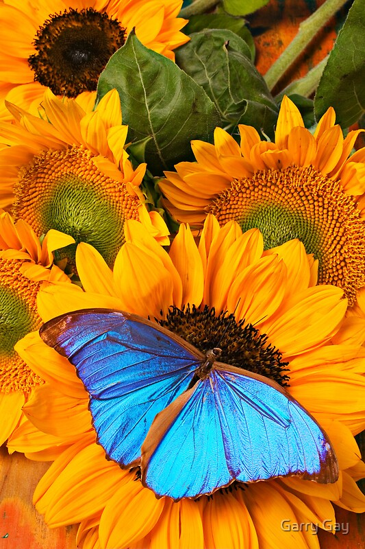 """Blue Butterfly On Sunflower"" Posters by Garry Gay 