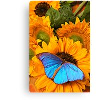 Blue Butterfly On Sunflower Canvas Print