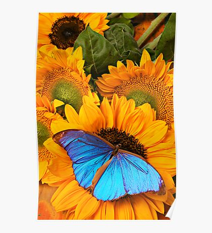 Blue Butterfly On Sunflower Poster