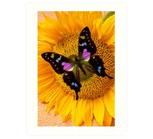 Purple Butterfly On Sunflower Art Print